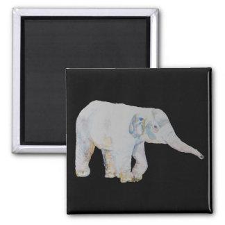 Elefante del bebé imán cuadrado