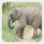 Elefante del bebé que sigue a la madre, Corbett Pegatina Cuadrada