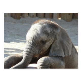 elefante del bebé postales