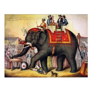 Elefante del circo del vintage tarjeta postal