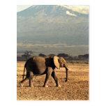 Elefante delante de Kilimanjaro Tarjetas Postales