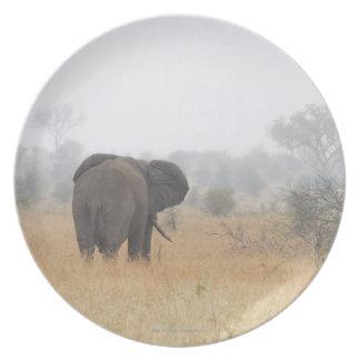 Elefante en la niebla de la madrugada, nacional de plato