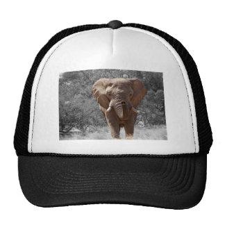 Elefante en Namibia Gorros Bordados