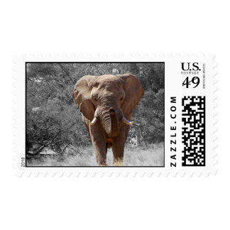 Elefante en Namibia Franqueo