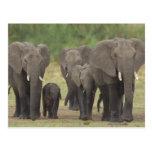 Elefante Family Postal