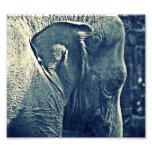Elefante Fotografia