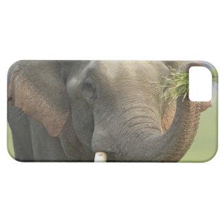 Elefante indio/asiático que exhibe la comida, Corb iPhone 5 Carcasa