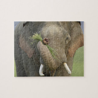 Elefante indio/asiático que exhibe la comida, Corb Rompecabeza Con Fotos