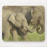 Elefante indio/asiático que pide la comida; Corbet Tapete De Ratón