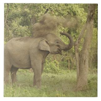 Elefante indio/asiático que toma el baño del polvo azulejo cuadrado grande