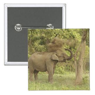 Elefante indio asiático que toma el baño del polvo pin
