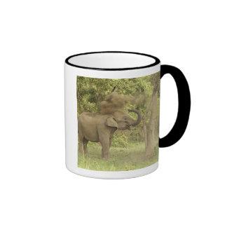 Elefante indio/asiático que toma el baño del polvo tazas