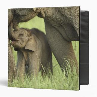 """Elefante indio/asiático y jóvenes uno, Corbett 2 Carpeta 1 1/2"""""""