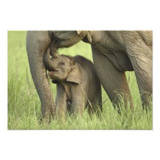 Elefante indio/asiático y jóvenes uno, Corbett 2 Fotografía
