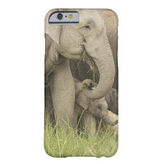 Elefante indio/asiático y jóvenes uno, Corbett 3 Funda De iPhone 6 Barely There