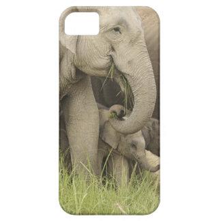 Elefante indio/asiático y jóvenes uno, Corbett 3 iPhone 5 Carcasa
