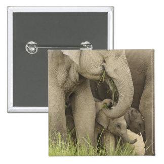 Elefante indio asiático y jóvenes uno Corbett 3 Pin