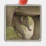 Elefante indio/asiático y jóvenes uno, Corbett Ornamentos Para Reyes Magos
