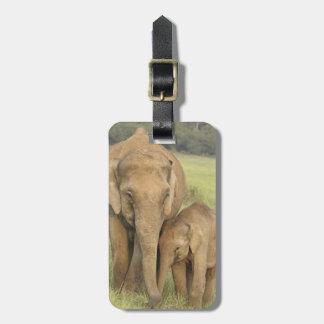 Elefante indio/asiático y jóvenes uno, Corbett Etiqueta De Maleta