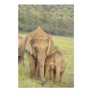 Elefante indio/asiático y jóvenes uno, Corbett Fotografías