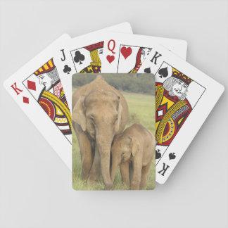 Elefante indio/asiático y jóvenes uno, Corbett Naipes