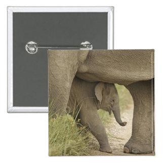 Elefante indio asiático y jóvenes uno Corbett Pins