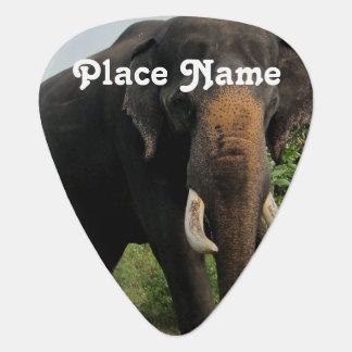 Elefante indio plumilla de guitarra