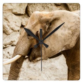 Elefante joven - reloj de pared
