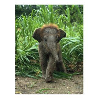 Elefante lindo del bebé postal