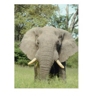 Elefante majestuoso tarjeta postal