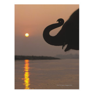 Elefante, parque nacional de Chitwan, Nepal Tarjetas Postales
