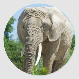 Elefante Pegatina Redonda