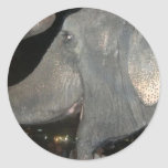 ¡elefante! pegatina redonda