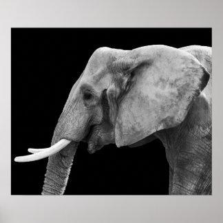 Elefante - poster