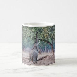 Elefante que alcanza para el árbol del acacia taza clásica