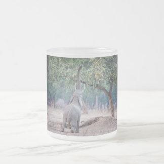 Elefante que alcanza para el árbol del acacia taza de cristal