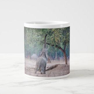 Elefante que alcanza para el árbol del acacia taza grande