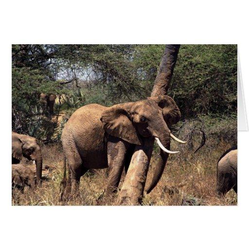 Elefante que raspa en árbol felicitaciones