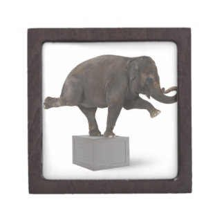 Elefante que realiza truco en la caja cajas de joyas de calidad