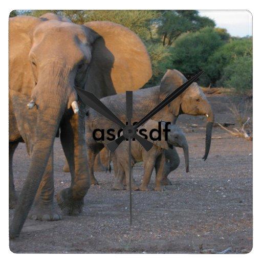 elefante reloj cuadrado