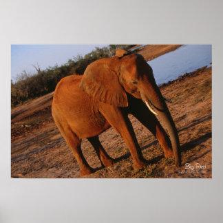 Elefante rojo grande poster