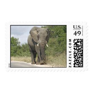 Elefante Envio