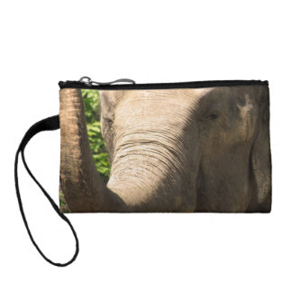 Elefante surafricano