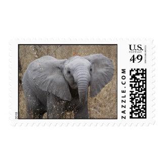 Elefante surafricano del bebé envio