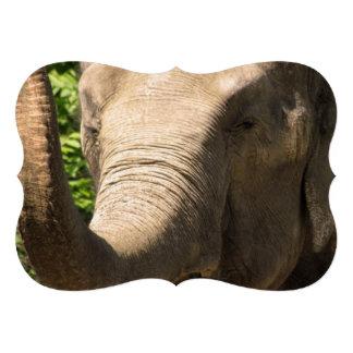 Elefante surafricano comunicados personales