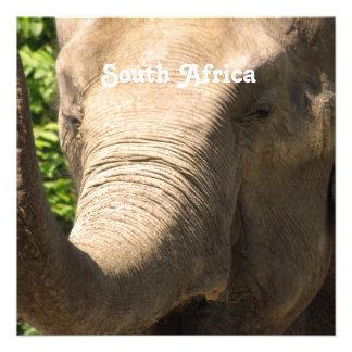 Elefante surafricano anuncio