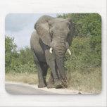Elefante Tapete De Raton