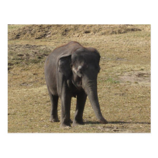 Elefante Tarjetas Postales