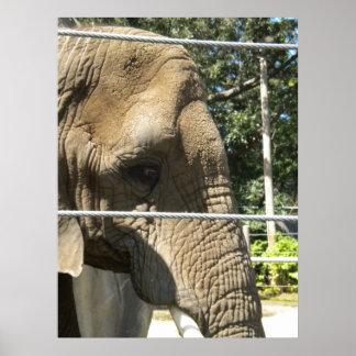 Elefante triste poster