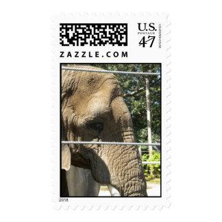 Elefante triste sellos postales